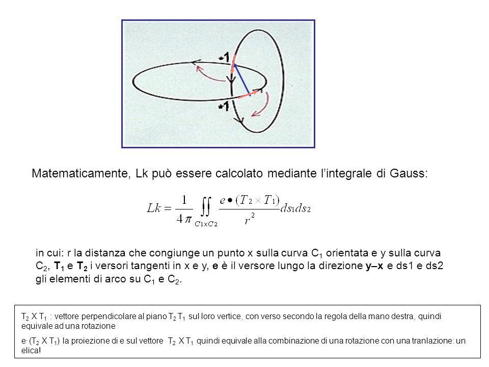 c2c2 c1c1 e Matematicamente, Lk può essere calcolato mediante lintegrale di Gauss: in cui: r la distanza che congiunge un punto x sulla curva C 1 orientata e y sulla curva C 2, T 1 e T 2 i versori tangenti in x e y, e è il versore lungo la direzione y–x e ds1 e ds2 gli elementi di arco su C 1 e C 2.