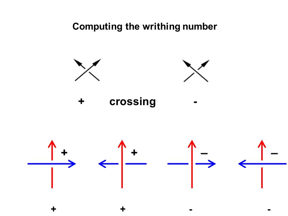 + crossing - + + - - Computing the writhing number