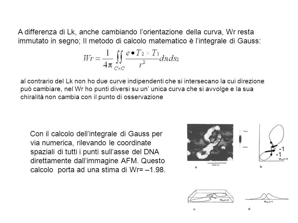 A differenza di Lk, anche cambiando lorientazione della curva, Wr resta immutato in segno; Il metodo di calcolo matematico è lintegrale di Gauss: Con il calcolo dellintegrale di Gauss per via numerica, rilevando le coordinate spaziali di tutti i punti sullasse del DNA direttamente dallimmagine AFM.