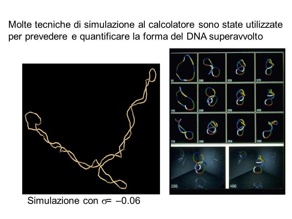 Simulazione con = –0.06 Molte tecniche di simulazione al calcolatore sono state utilizzate per prevedere e quantificare la forma del DNA superavvolto