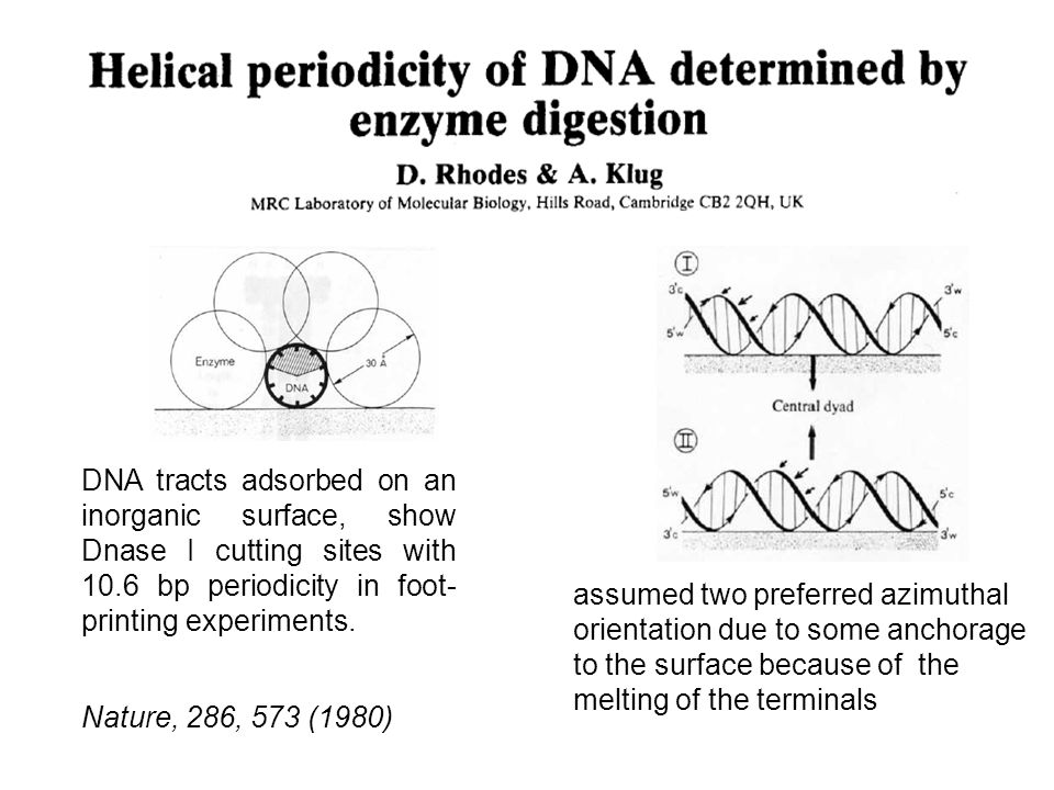 Nature, 286, 573 (1980) DNA tracts adsorbed on an inorganic surface, show Dnase I cutting sites with 10.6 bp periodicity in foot- printing experiments