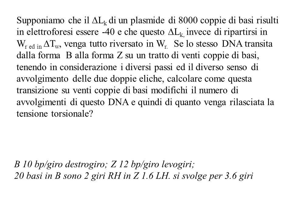 Supponiamo che il L k di un plasmide di 8000 coppie di basi risulti in elettroforesi essere -40 e che questo L k, invece di ripartirsi in W r ed in T w, venga tutto riversato in W r.