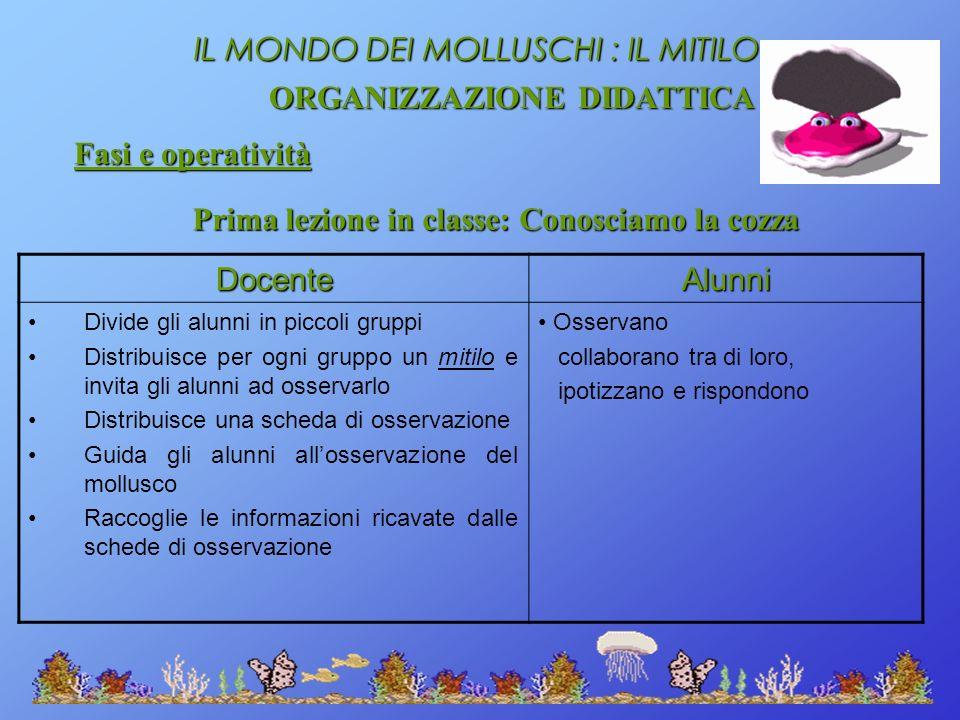 IL MONDO DEI MOLLUSCHI : IL MITILO ORGANIZZAZIONE DIDATTICA Fasi e operatività Prima lezione in classe: Conosciamo la cozza DocenteAlunni Divide gli a