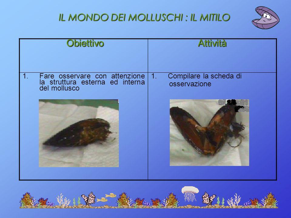 IL MONDO DEI MOLLUSCHI : IL MITILO Obiettivo ObiettivoAttività 1.Fare osservare con attenzione la struttura esterna ed interna del mollusco 1.Compilar