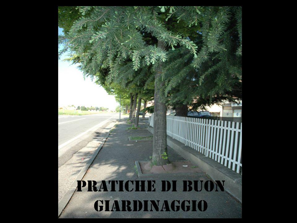 PRATICHE DI buon GIARDINAGGIO