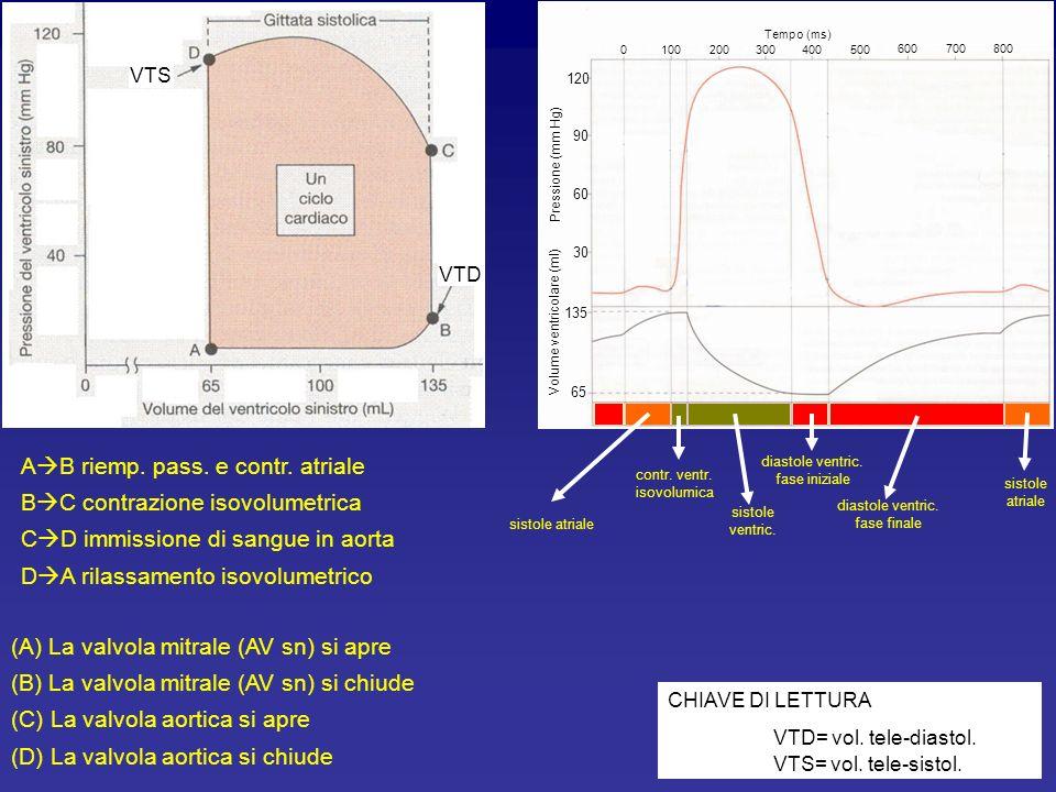 Rilassamento ventricolare fase finale 2 a fase: quando P IV <P A Apertura valvole AV Inizio riempimento ventricolare attraverso le valvole AV 90 60 30