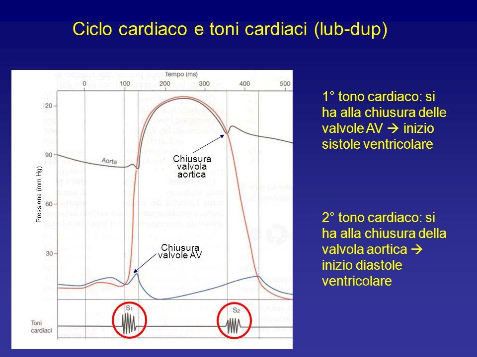 Elettrocardiogramma Pressione (mm Hg) Ciclo cardiaco ed elettrocardiogramma Onda P: depolarizzazione atriale Segmento P-Q: conduzione attraverso il no