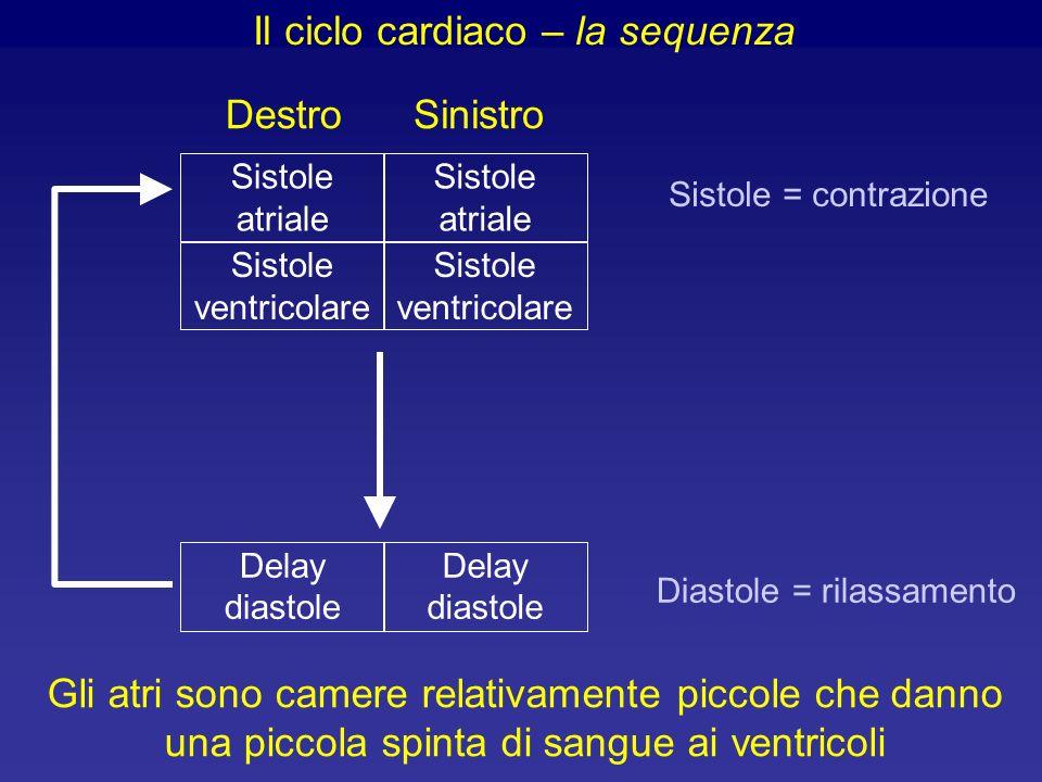 Delay diastole Sistole atriale Sistole atriale Delay diastole Sistole ventricolare Sistole ventricolare SinistroDestro Sistole = contrazione Gli atri sono camere relativamente piccole che danno una piccola spinta di sangue ai ventricoli Diastole = rilassamento Il ciclo cardiaco – la sequenza