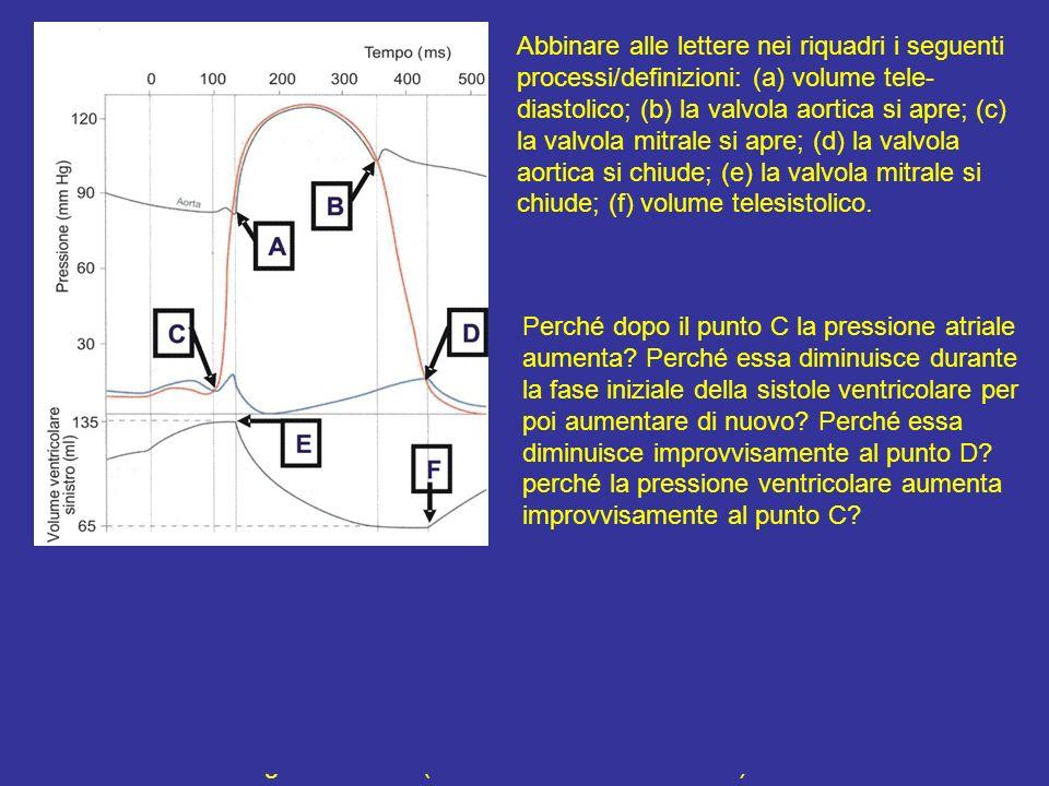 Abbinare i segmenti seguenti ai corrispondenti eventi ventricolari: A B (a) immissione di sangue in aorta B C (b) contrazione isovolumetrica C D (c) r