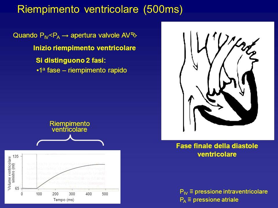 Riempimento ventricolare (500ms) Quando P IV <P A apertura valvole AV Inizio riempimento ventricolare Si distinguono 2 fasi: P IV pressione intraventricolare P A pressione atriale Volume ventricolare sinistro (ml) 1000200300400500 Tempo (ms) 65 135 1 a fase – riempimento rapido Riempimento ventricolare Fase finale della diastole ventricolare