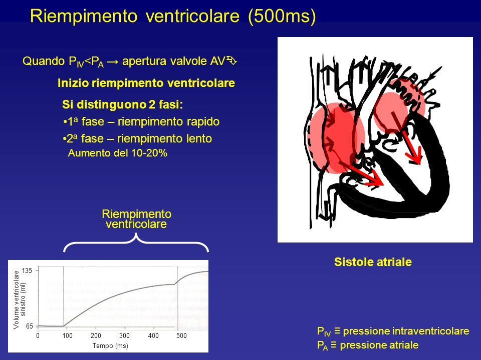 Riempimento ventricolare (500ms) P IV pressione intraventricolare P A pressione atriale Volume ventricolare sinistro (ml) 1000200300400500 Tempo (ms) 65 135 Quando P IV <P A apertura valvole AV Inizio riempimento ventricolare Si distinguono 2 fasi: 1 a fase – riempimento rapido 2 a fase – riempimento lento Aumento del 10-20% Riempimento ventricolare Sistole atriale