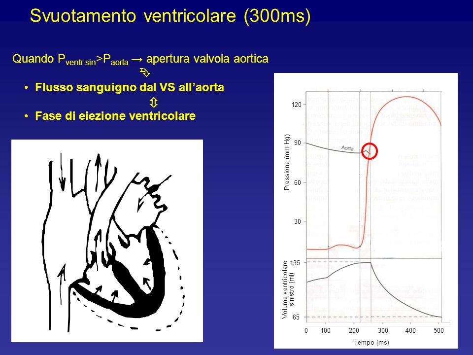 Svuotamento ventricolare (300ms) Quando P ventr sin >P aorta apertura valvola aortica Flusso sanguigno dal VS allaorta Fase di eiezione ventricolare 100200300400 Tempo (ms) 5000 90 60 30 120 Pressione (mm Hg) 65 135 Volume ventricolare sinistro (ml)