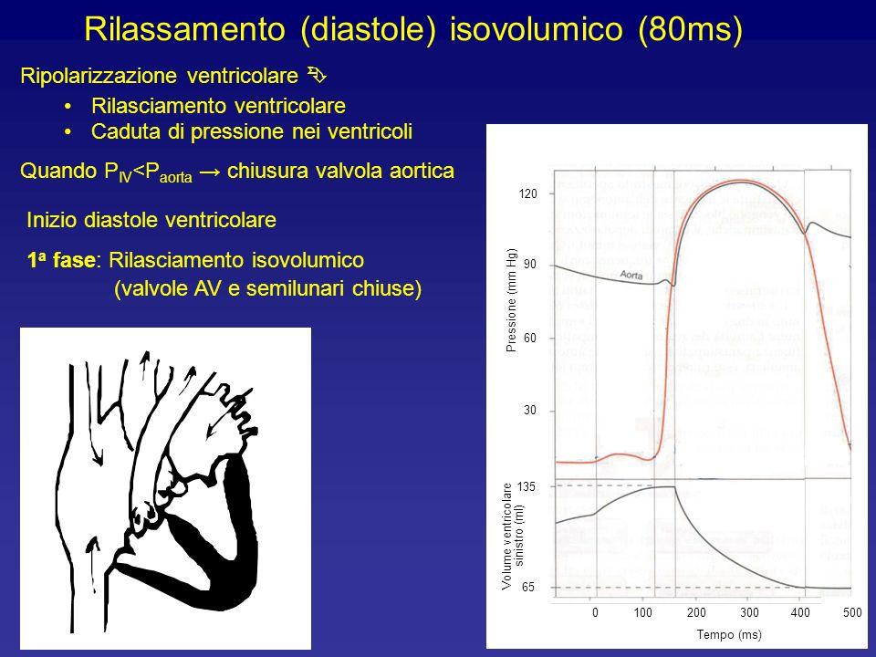 Rilassamento (diastole) isovolumico (80ms) Ripolarizzazione ventricolare Rilasciamento ventricolare Caduta di pressione nei ventricoli Quando P IV <P aorta chiusura valvola aortica Inizio diastole ventricolare 1 a fase: Rilasciamento isovolumico (valvole AV e semilunari chiuse) 90 60 30 120 Pressione (mm Hg) 65 135 Volume ventricolare sinistro (ml) 100200300400 Tempo (ms) 5000