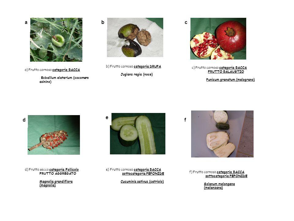 a a) Frutto carnoso categoria BACCA Ecballium elaterium (cocomero asinino) bc c) Frutto carnoso categoria BACCA FRUTTO BALAUSTIO Punicum granatum (mel