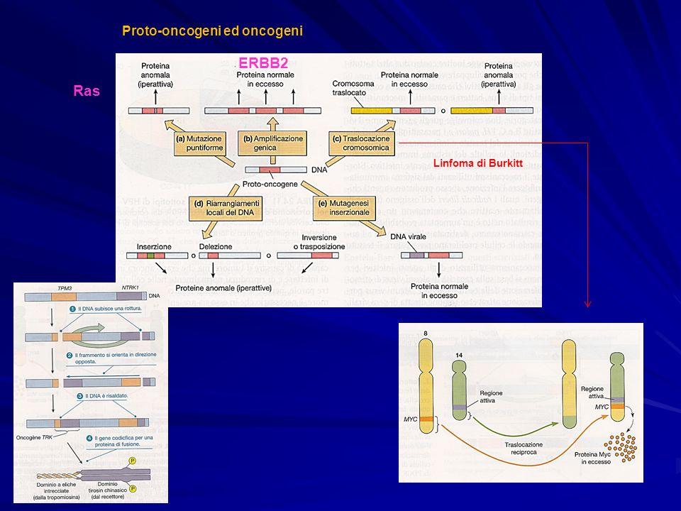 Proto-oncogeni ed oncogeni Ras ERBB2 Linfoma di Burkitt