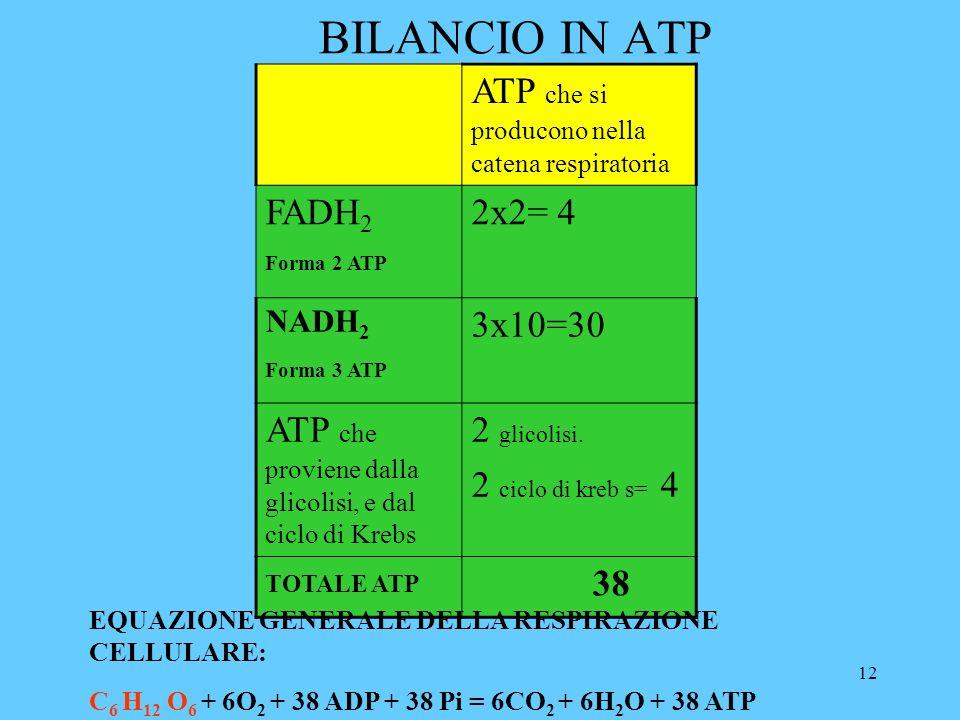 12 BILANCIO IN ATP ATP che si producono nella catena respiratoria FADH 2 Forma 2 ATP 2x2= 4 NADH 2 Forma 3 ATP 3x10=30 ATP che proviene dalla glicolisi, e dal ciclo di Krebs 2 glicolisi.