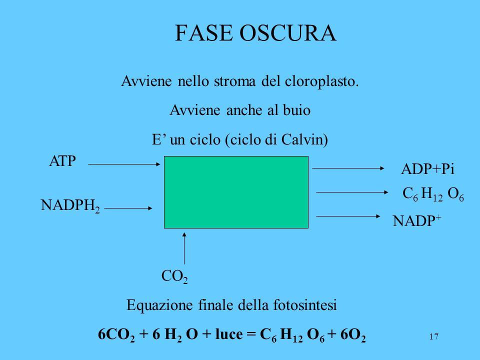17 FASE OSCURA Avviene nello stroma del cloroplasto.