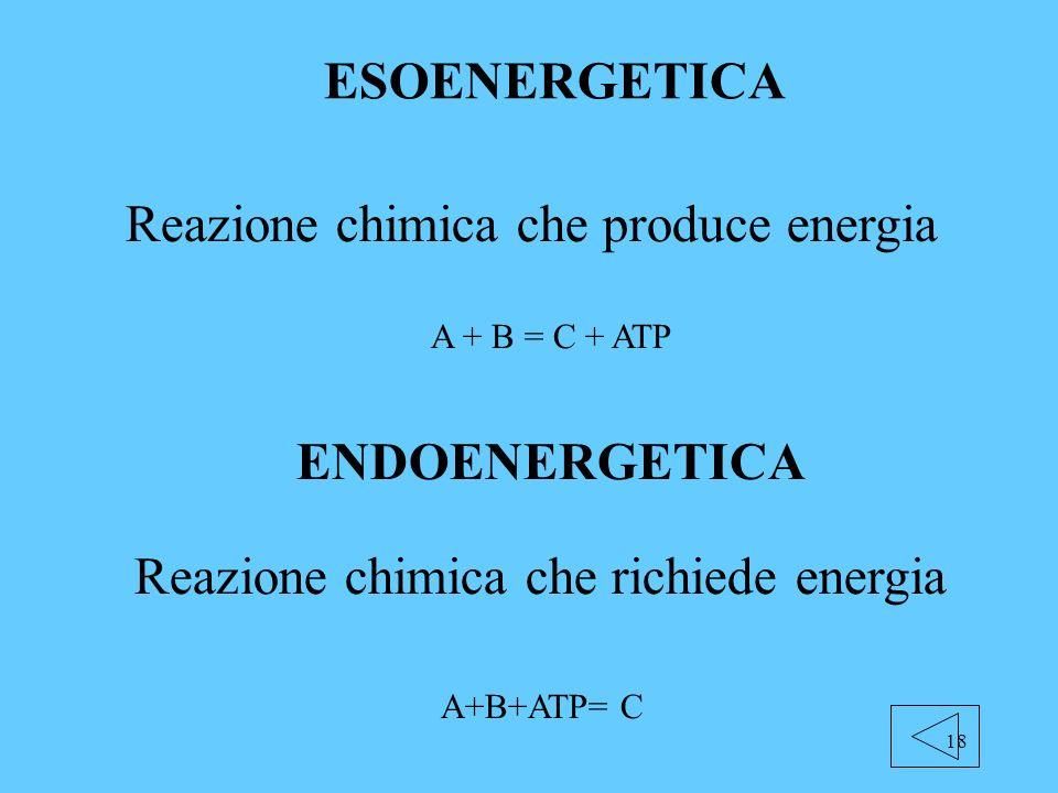 18 ESOENERGETICA Reazione chimica che produce energia A + B = C + ATP ENDOENERGETICA A+B+ATP= C Reazione chimica che richiede energia