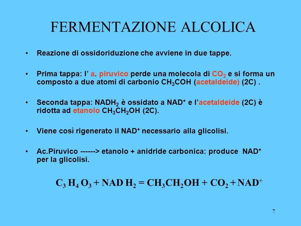 8 IN PRESENZA DI OSSIGENO In presenza di ossigeno, lac.piruvico è ulteriormente ossidato nei mitocondri; entra nei mitocondri trasportato da un carrier; Una volta dentro subisce una trasformazione: ac.piruvico NAD + NAD H 2 CO 2 CoA Acetil CoA Lacido piruvico perde una molecola di anidride carbonica, e si forma una molecola di NAD ridotto; il composto a due atomi di carbonio che si forma si lega con il coenzima A, formando lacetil coenzima A che porta la molecola a 2 atomi di C, acido acetico, nel ciclo di Krebs cedendolo all acido ossalacetico che si riforma alla fine del ciclo.