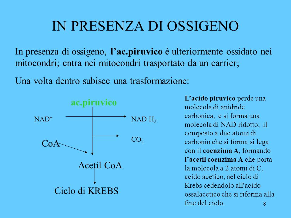 9 CICLO DI KREBS Alla fine del ciclo tutto il carbonio che costituiva il glucosio è ossidato a CO 2 e lidrogeno è stato accettato dal NAD + e dal FAD +.