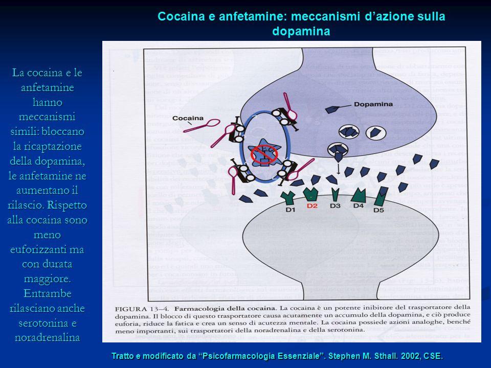La cocaina e le anfetamine hanno meccanismi simili: bloccano la ricaptazione della dopamina, le anfetamine ne aumentano il rilascio. Rispetto alla coc