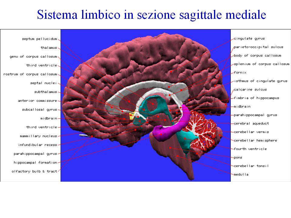 Le sostanze: eventi neuro biochimici Le aree cerebrali, descritte hanno come substrato gruppi specifici di neuro trasmettitori.