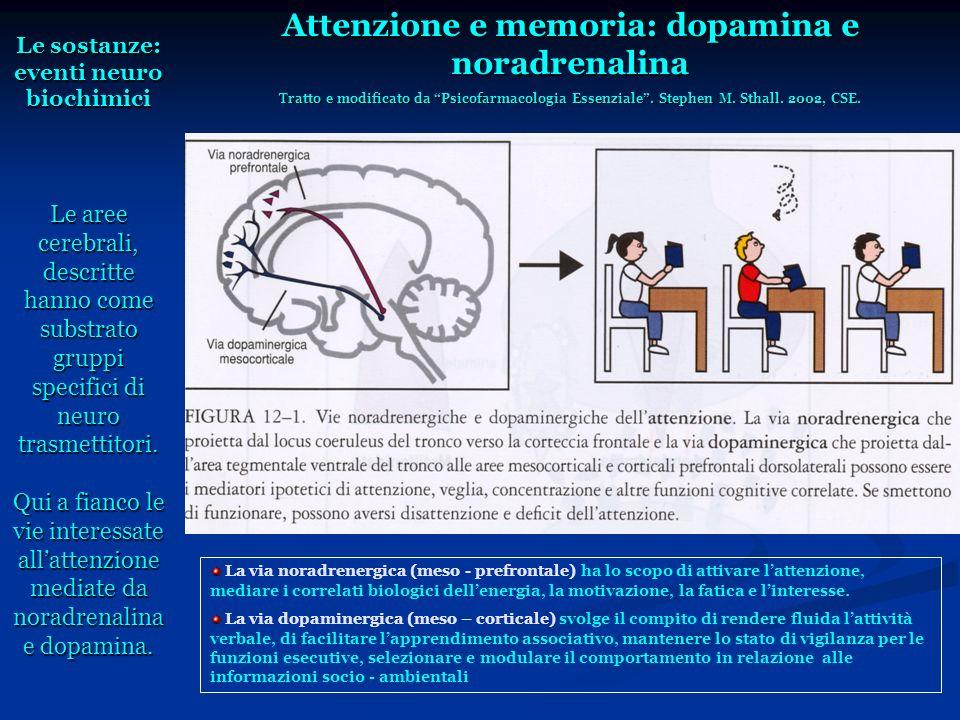 Le sostanze: eventi neuro biochimici Le aree cerebrali, descritte hanno come substrato gruppi specifici di neuro trasmettitori. Qui a fianco le vie in