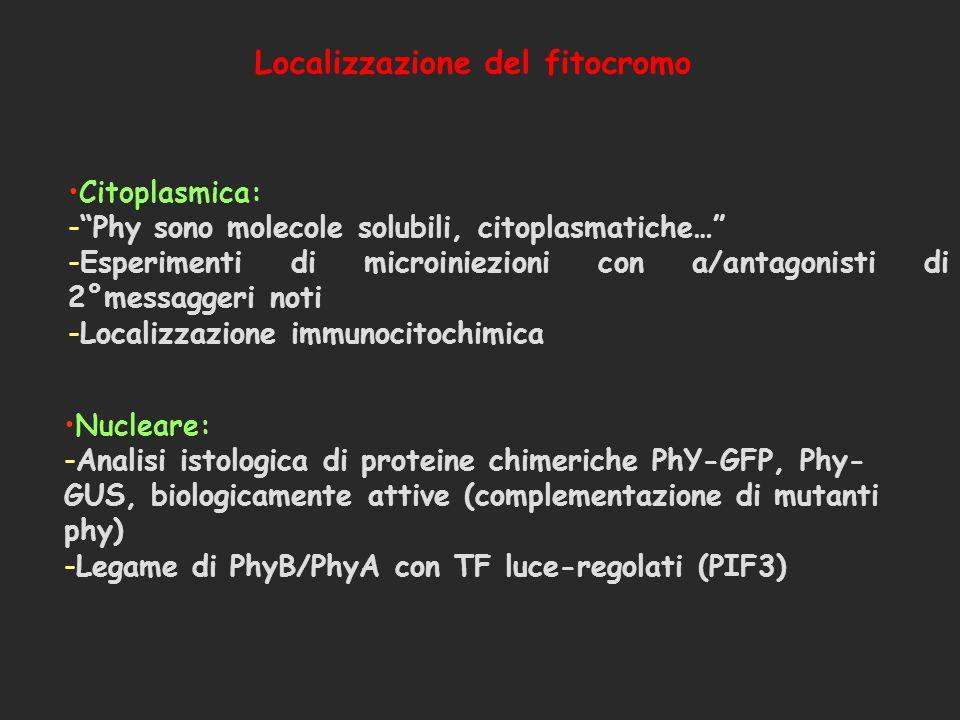 Citoplasmica: -Phy sono molecole solubili, citoplasmatiche… -Esperimenti di microiniezioni con a/antagonisti di 2°messaggeri noti -Localizzazione immu