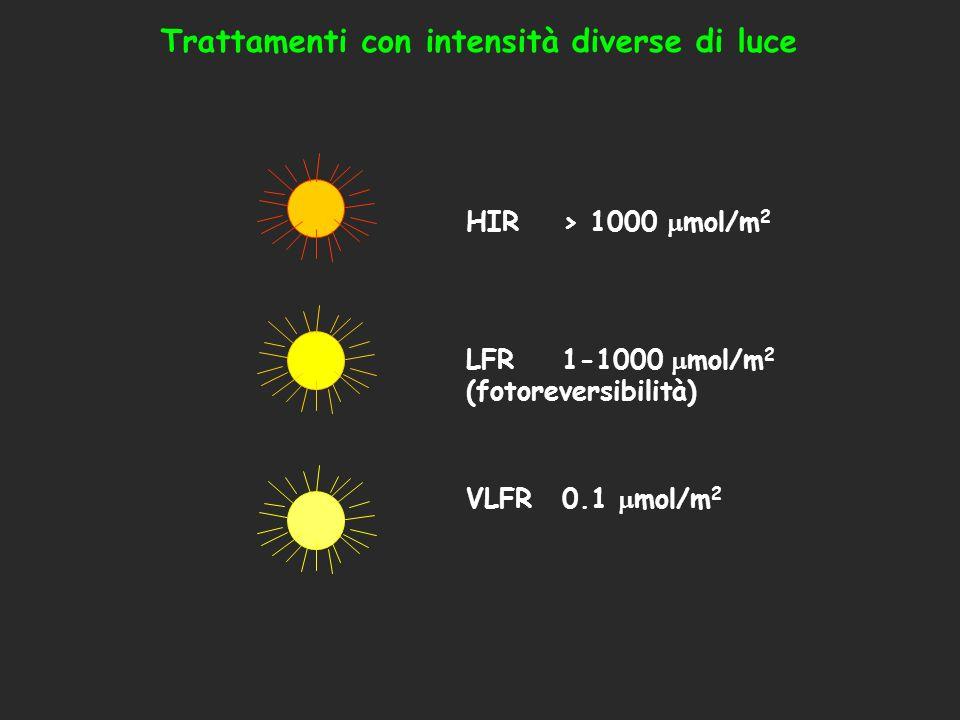 HIR> 1000 mol/m 2 LFR1-1000 mol/m 2 (fotoreversibilità) VLFR0.1 mol/m 2 Trattamenti con intensità diverse di luce