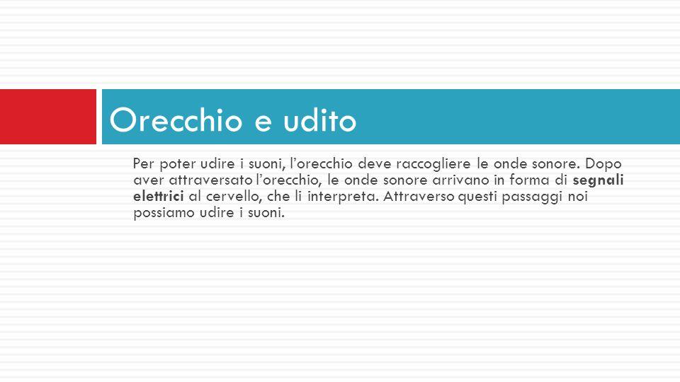 Per poter udire i suoni, lorecchio deve raccogliere le onde sonore. Dopo aver attraversato lorecchio, le onde sonore arrivano in forma di segnali elet