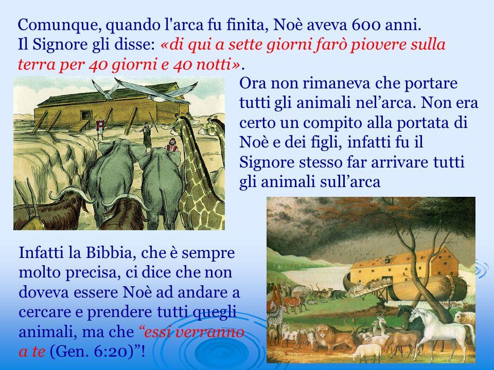 Comunque, quando l'arca fu finita, Noè aveva 600 anni. Il Signore gli disse: «di qui a sette giorni farò piovere sulla terra per 40 giorni e 40 notti»