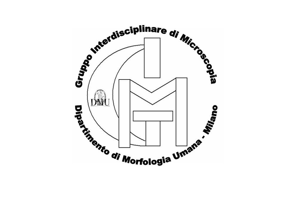 Il microscopio ottico Principi base Cristiano Rumio Dipartimento Anatomia Umana Università degli Studi di Milano
