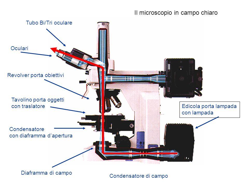 Diaframma di campo Condensatore con diaframma dapertura Tavolino porta oggetti con traslatore Revolver porta obiettivi Tubo Bi/Tri oculare Edicola por