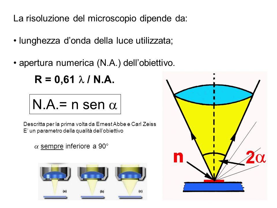 La risoluzione del microscopio dipende da: lunghezza donda della luce utilizzata; apertura numerica (N.A.) dellobiettivo. N.A.= n sen Descritta per la