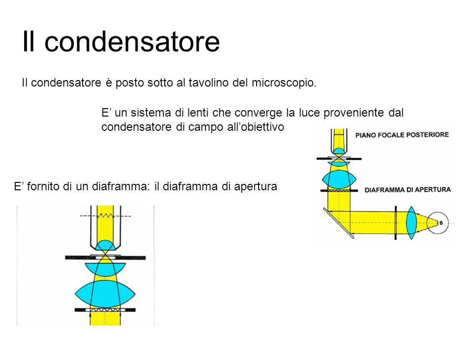 Il condensatore Il condensatore è posto sotto al tavolino del microscopio. E un sistema di lenti che converge la luce proveniente dal condensatore di