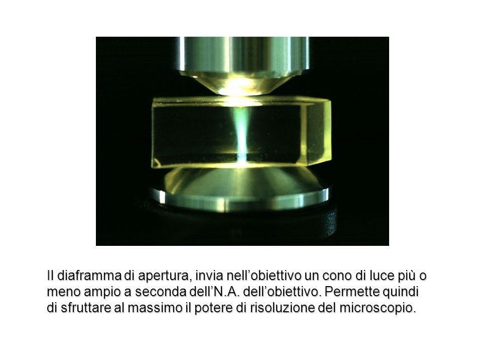 Il diaframma di apertura, invia nellobiettivo un cono di luce più o meno ampio a seconda dellN.A. dellobiettivo. Permette quindi di sfruttare al massi