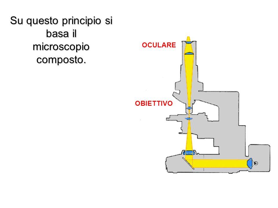 OCULARE OBIETTIVO Su questo principio si basa il microscopio composto.