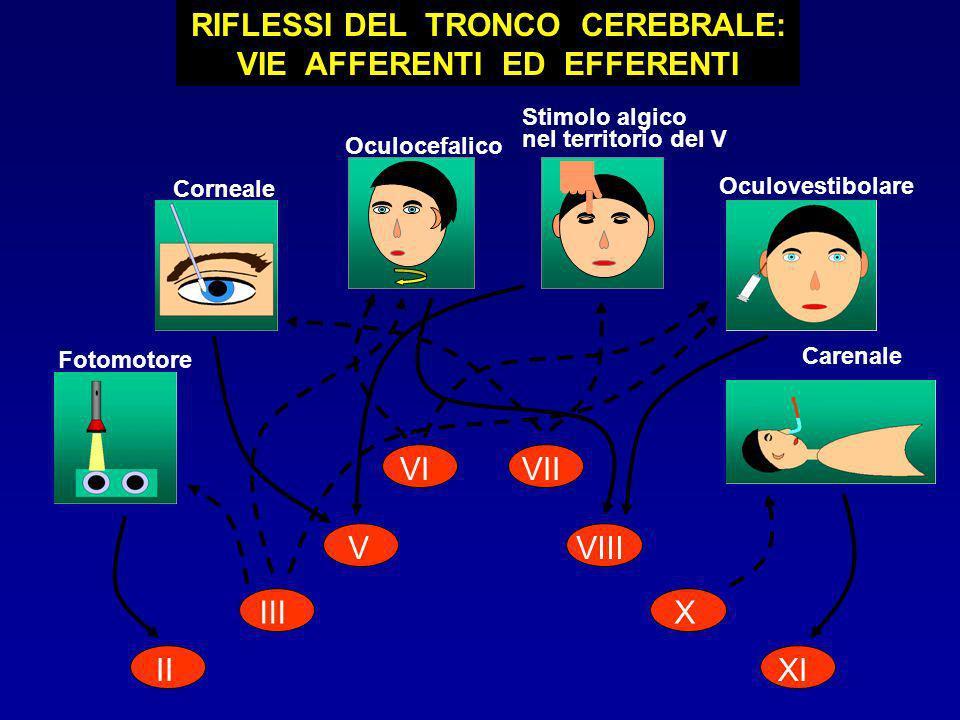 II III V VIVII VIII X XI Fotomotore Corneale Oculocefalico Oculovestibolare RIFLESSI DEL TRONCO CEREBRALE: VIE AFFERENTI ED EFFERENTI Stimolo algico n