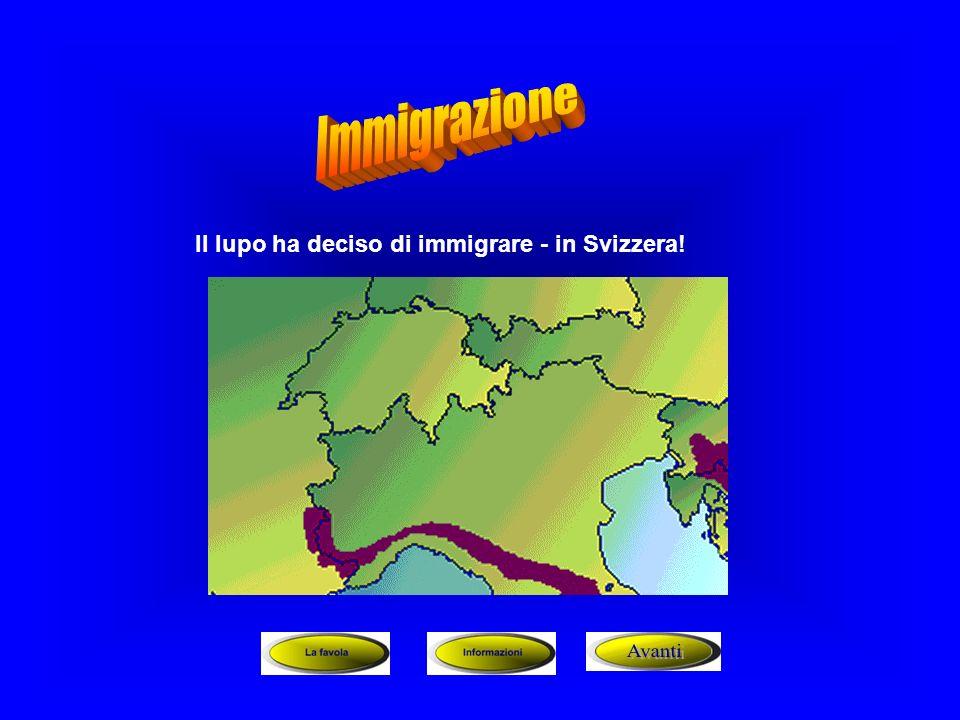 Il lupo ha deciso di immigrare - in Svizzera!