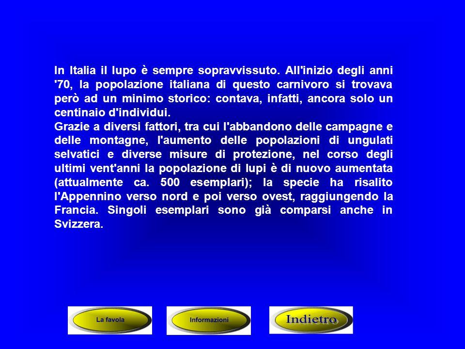 In Italia il lupo è sempre sopravvissuto. All'inizio degli anni '70, la popolazione italiana di questo carnivoro si trovava però ad un minimo storico: