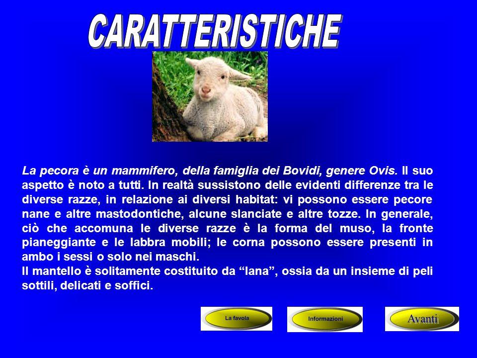 La pecora è un mammifero, della famiglia dei Bovidi, genere Ovis. Il suo aspetto è noto a tutti. In realtà sussistono delle evidenti differenze tra le
