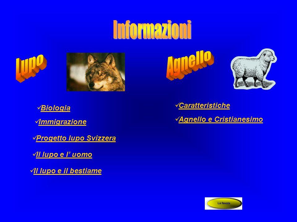 Biologia Immigrazione Progetto lupo Svizzera Il lupo e l uomo Il lupo e il bestiame Caratteristiche Agnello e Cristianesimo