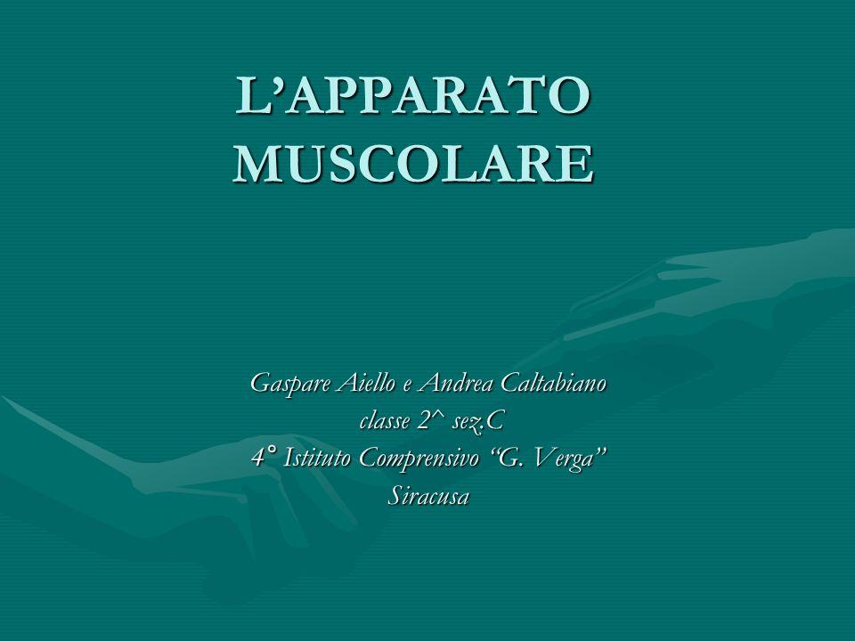 LAPPARATO MUSCOLARE Gaspare Aiello e Andrea Caltabiano classe 2^ sez.C classe 2^ sez.C 4° Istituto Comprensivo G. Verga Siracusa