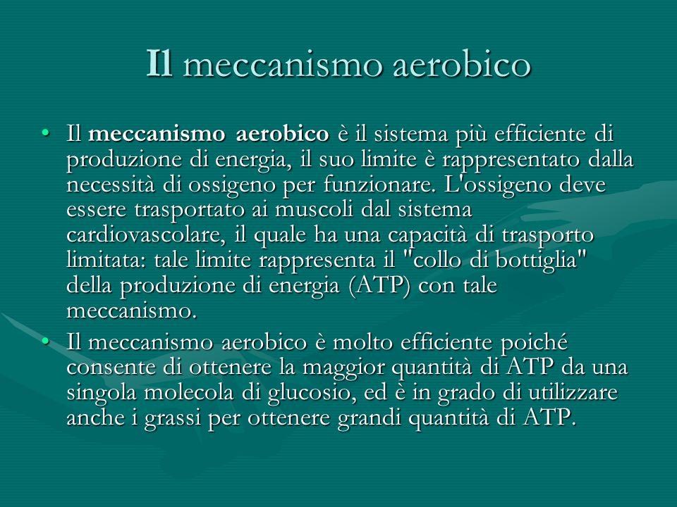 Il meccanismo aerobico Il meccanismo aerobico è il sistema più efficiente di produzione di energia, il suo limite è rappresentato dalla necessità di o