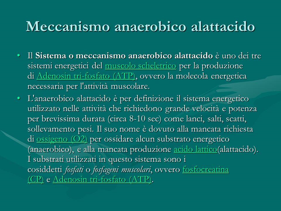 Meccanismo anaerobico alattacido Il Sistema o meccanismo anaerobico alattacido è uno dei tre sistemi energetici del muscolo scheletrico per la produzi