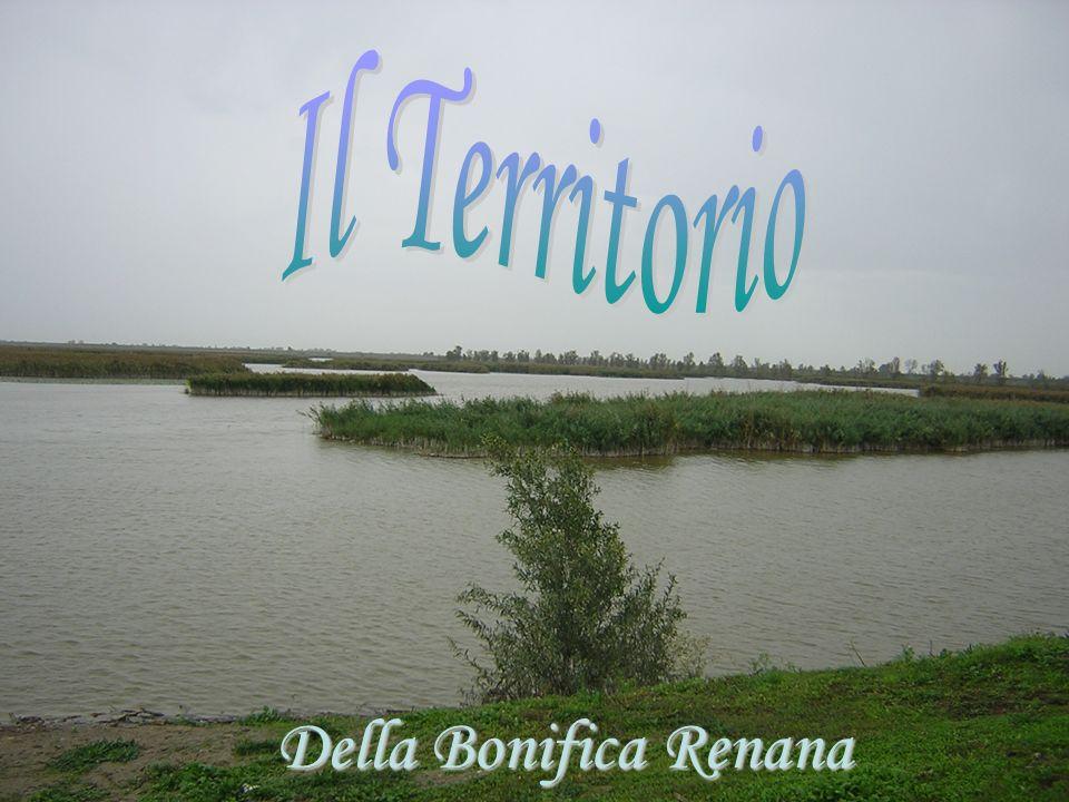 Della Bonifica Renana