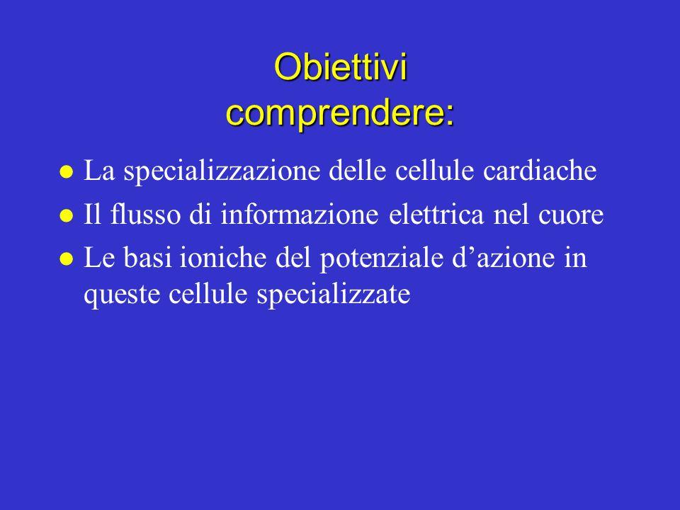 Obiettivi comprendere: l La specializzazione delle cellule cardiache l Il flusso di informazione elettrica nel cuore l Le basi ioniche del potenziale dazione in queste cellule specializzate