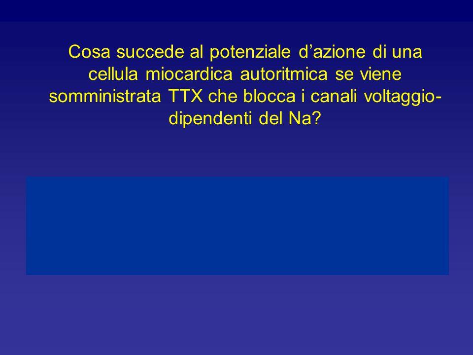 Ritenete che i canali del Ca2+ presenti nelle cellule autoritmiche siano identici ai canali del Ca 2+ presenti nelle cellule contrattili? Giustificate