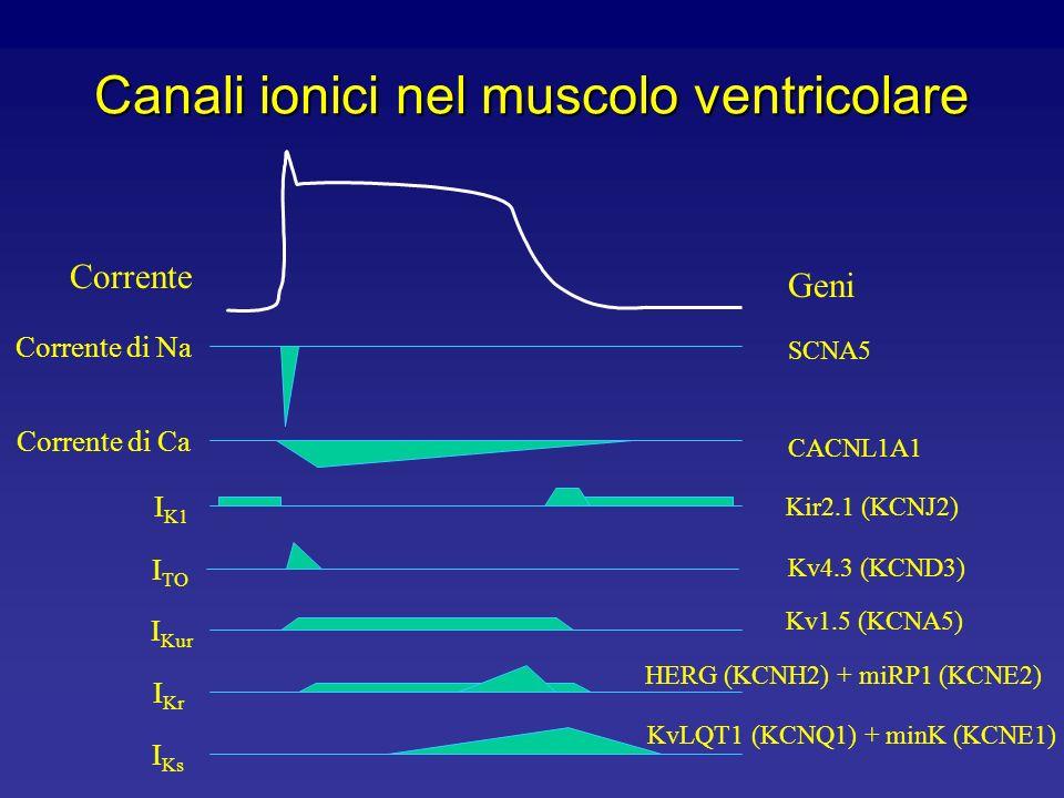 Canali ionici nel muscolo ventricolare Potenziale di membrana del muscolo ventricolare (mV) -50 0 200 msec Canali del K inattivanti (I TO ) Canali del