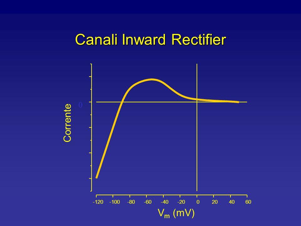 Struttura dellInward Rectifier (IRK1) M1M2 HO 2 C H2NH2N Interno Regione P Fluido extracellulare membrane Nota: non ha un sensore del voltaggio